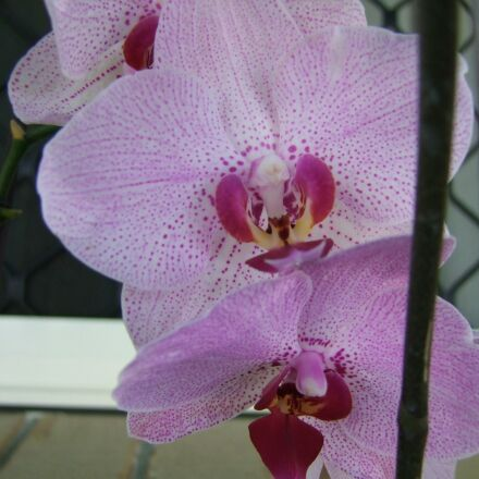 flower, flora, nature, Fujifilm FinePix S100FS