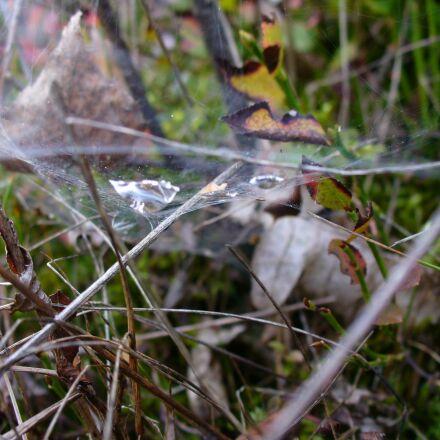 cobweb, autumn, fall foliage, Panasonic DMC-LZ5