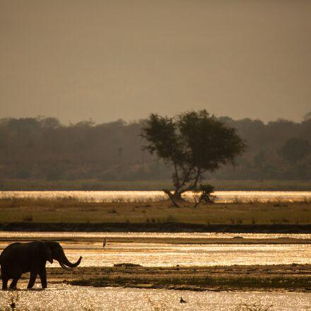 elephant, sunset, silhouette, Canon EOS 5D MARK III