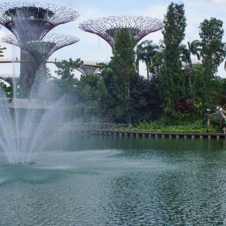 singapore, gardens, trees, Sony SLT-A65