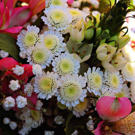 flowers, Nikon D300S