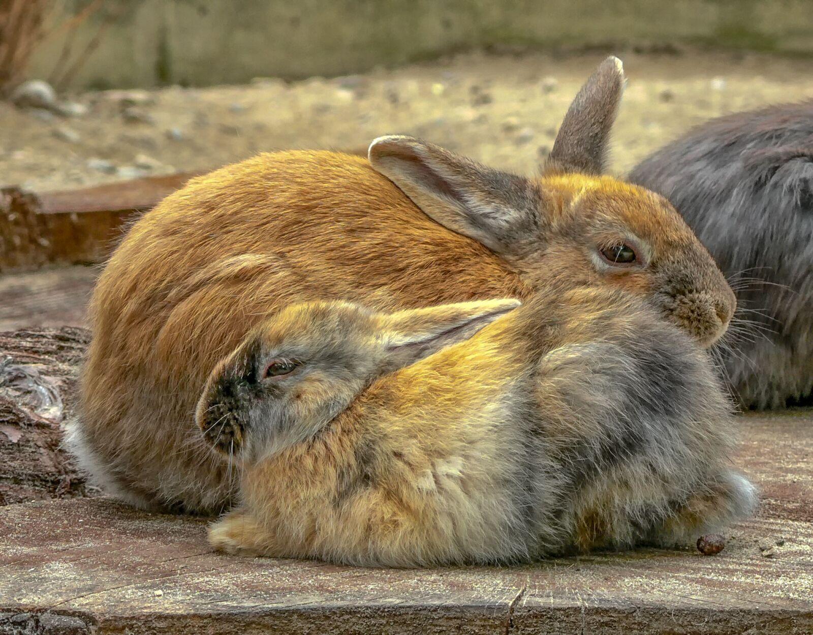 rabbit, mammal, animal world