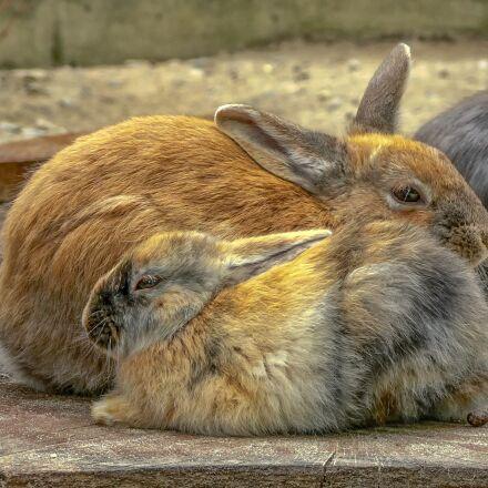 rabbit, mammal, animal world, Panasonic DMC-FZ5