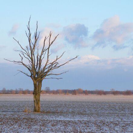 landscape, winter, tree, Fujifilm FinePix S8100fd