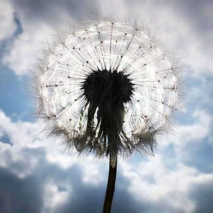clouds, cloudy, dandelion, dandelion, Fujifilm FinePix F900EXR
