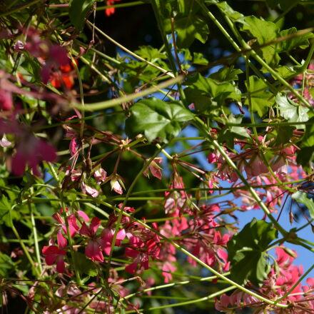 flowers, Nikon D5100