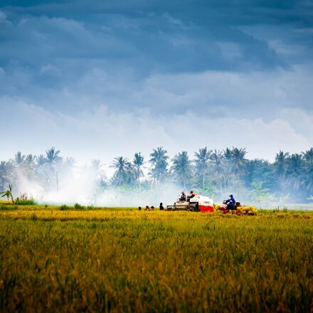 vietnam, countryside, harvest, Canon EOS 5D