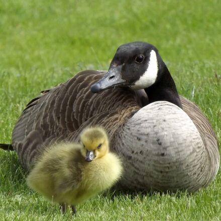 duck, shell, chick, Fujifilm FinePix S3400