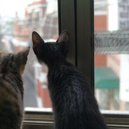 cat, two, kitten, Samsung NX mini