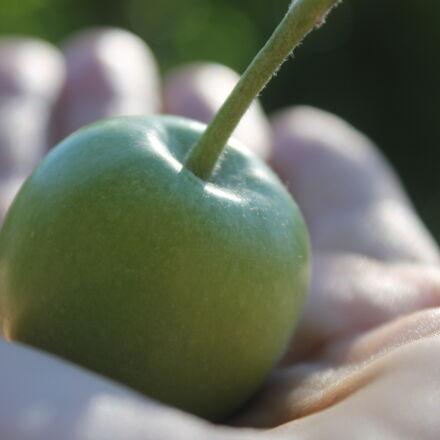 apple, hand, Canon EOS 1100D