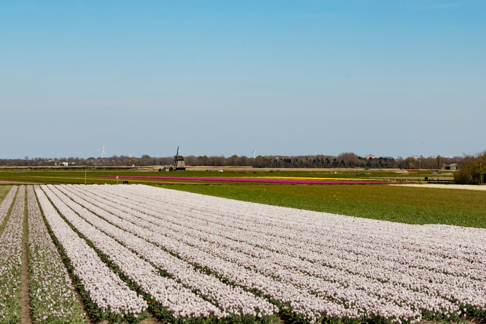 "Canon EOS 70D sample photo. ""Tulip fields, tulips, holland"" photography"