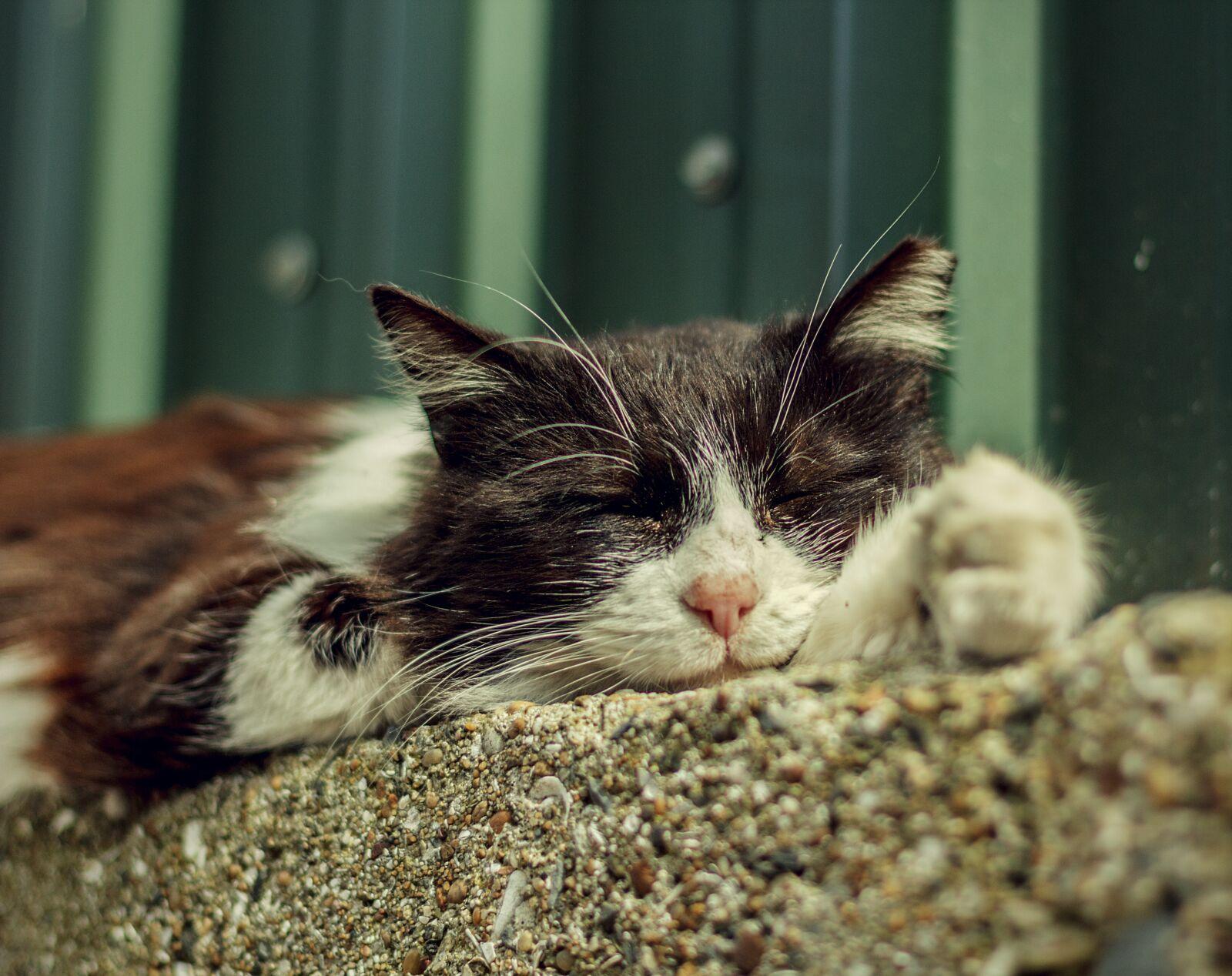 "Canon EOS 60D sample photo. ""Cat, animal, asleep"" photography"
