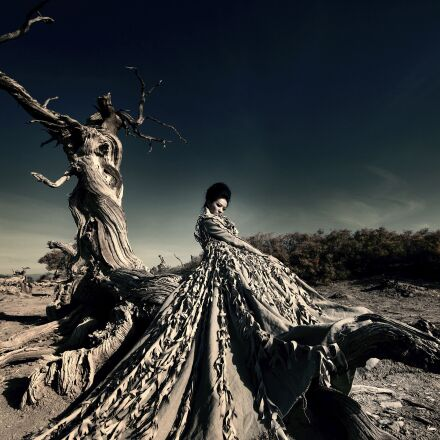 withered, artistic conception, beautiful, Canon EOS 5D MARK III