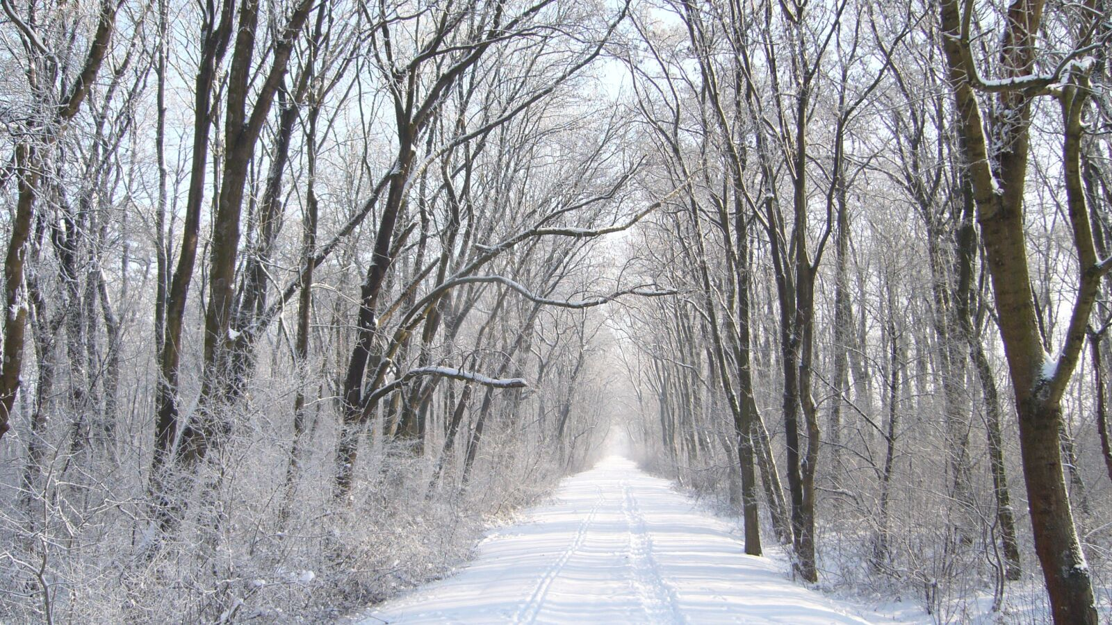 path, snow, frost