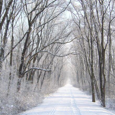 path, snow, frost, Panasonic DMC-LS2