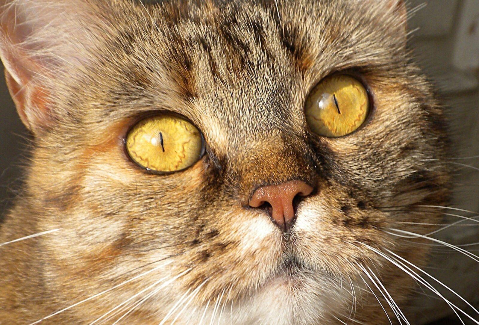 cat, head, face