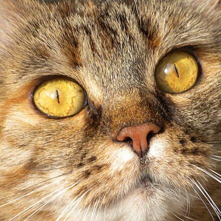 cat, head, face, Nikon COOLPIX S630