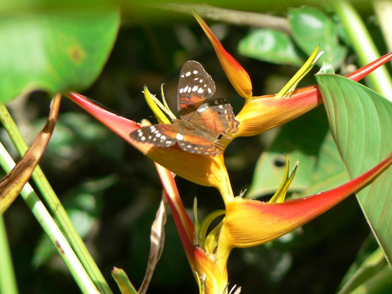 colombia, flor, hojas, mariposa