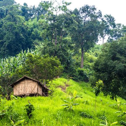 green, joom_house, nature, Nikon D7200