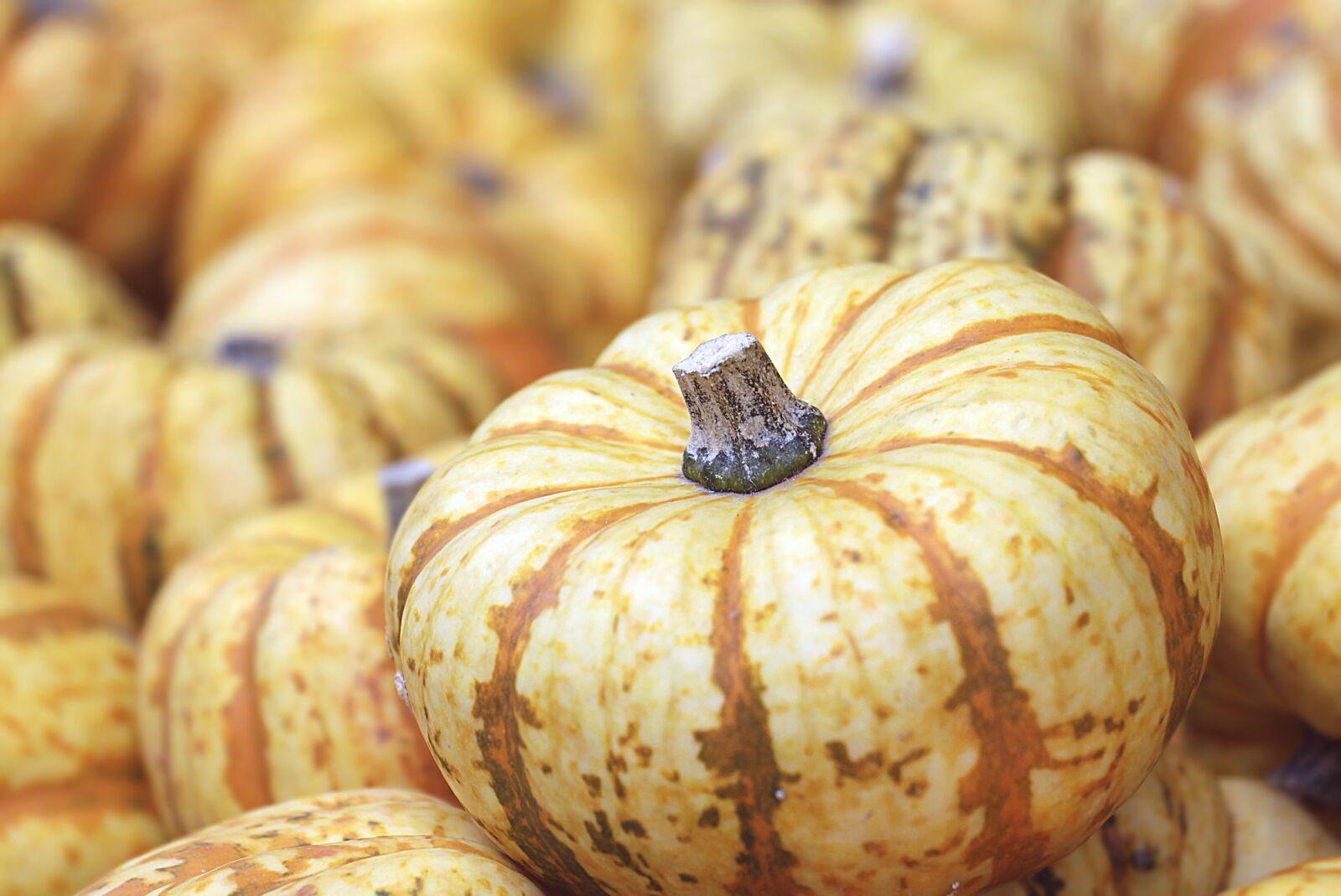 "Canon EOS 100D (EOS Rebel SL1 / EOS Kiss X7) sample photo. ""Pumpkin, autumn, food"" photography"
