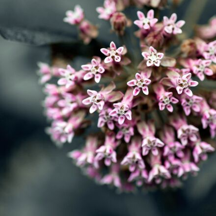 flower, spring, nature, Canon EOS 5D MARK II