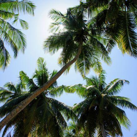 palm trees, blue sky, Sony NEX-5