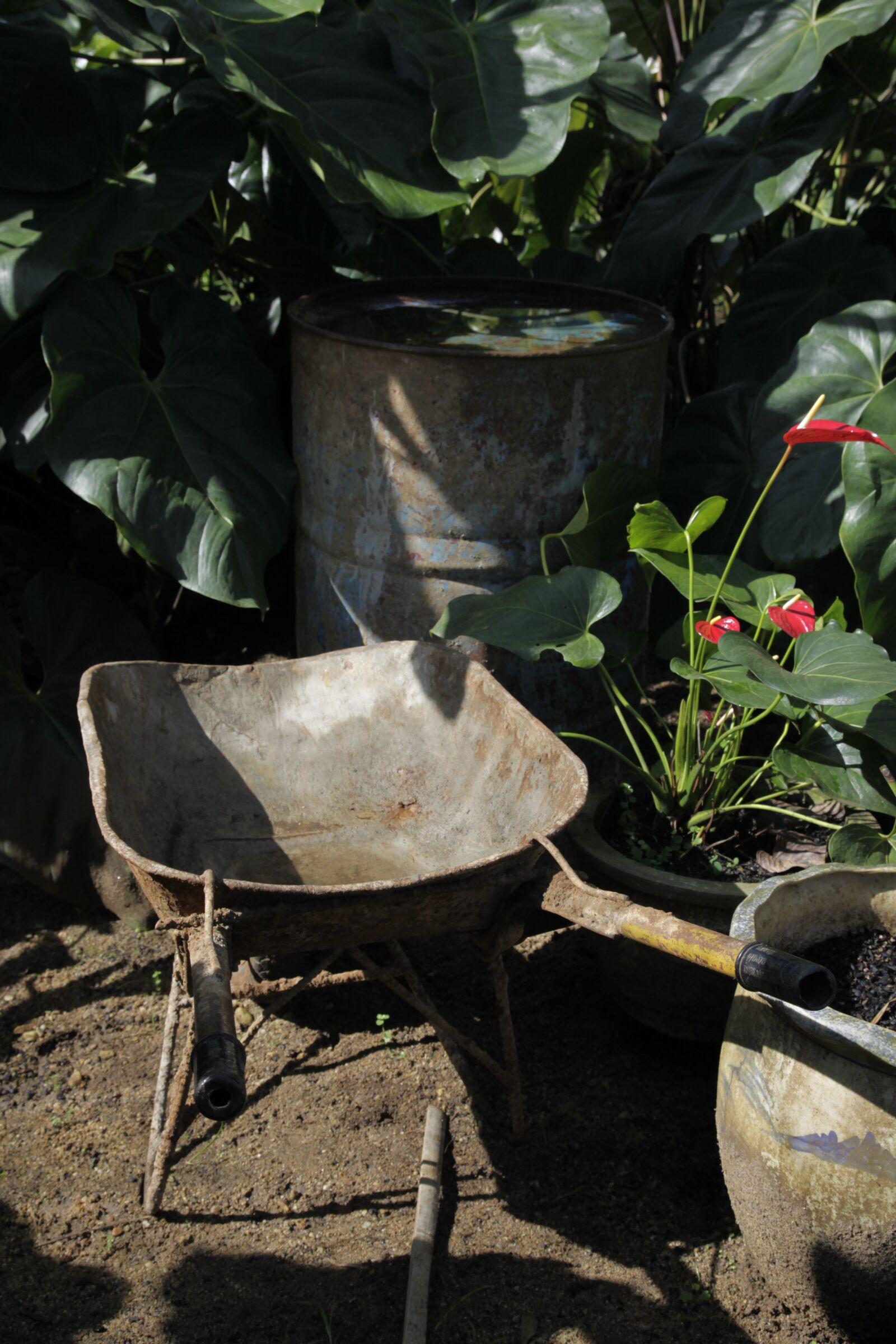 """Canon EOS 50D sample photo. """"Garden, farm, basket"""" photography"""