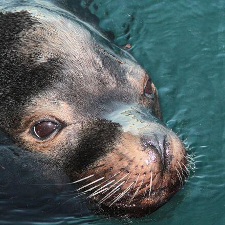 animal, cute, ocean, Canon EOS REBEL T4I