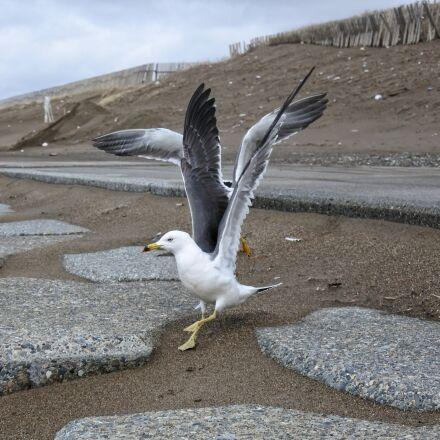 animal, coast, beach, Nikon 1 J5
