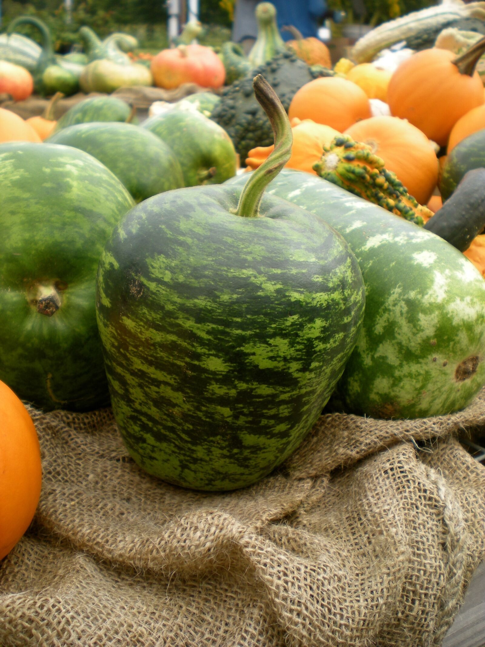 "Nikon COOLPIX S202 sample photo. ""Squash, vegetables, food"" photography"