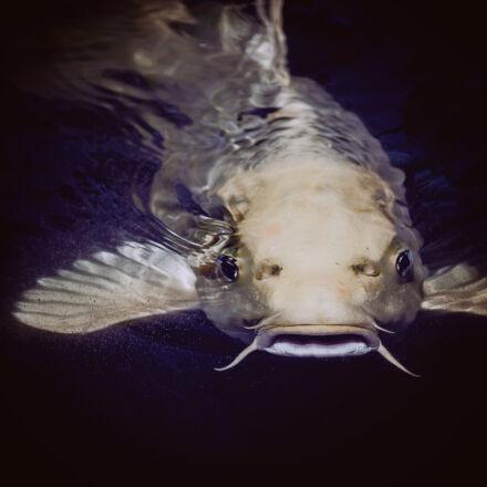 catfish, in, body, of, Nikon D750