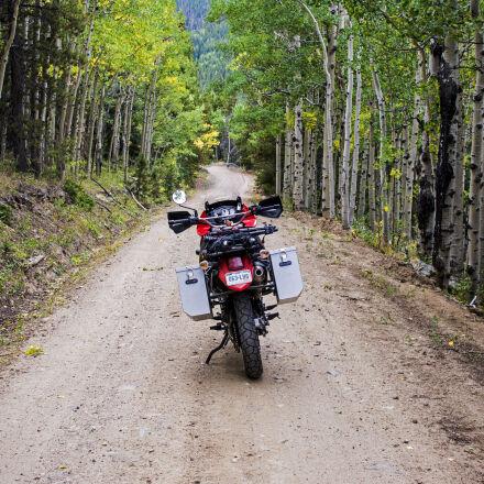 adventure, aspen, aspen, trees, Nikon D7100