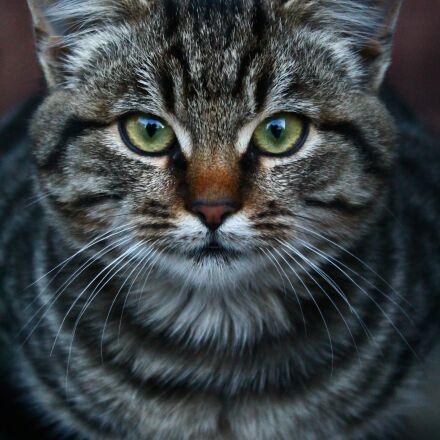 animals, pet, cat, Canon EOS 1100D