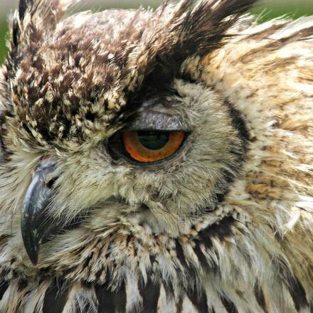 bird, of, prey, eagle, Fujifilm FinePix F900EXR