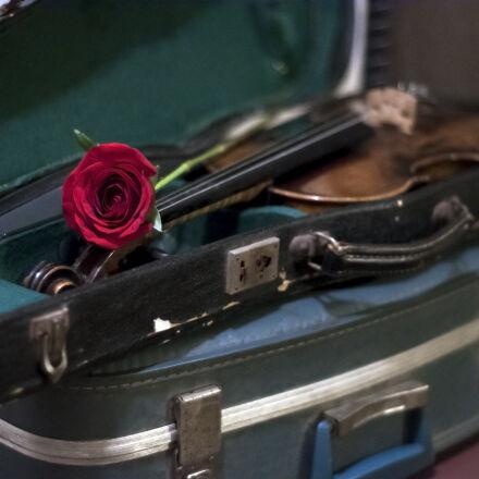rose, suitcase, vintage, violin, Nikon D90
