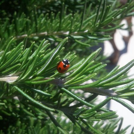 ladybug, insect, nature, Samsung SGH-I897