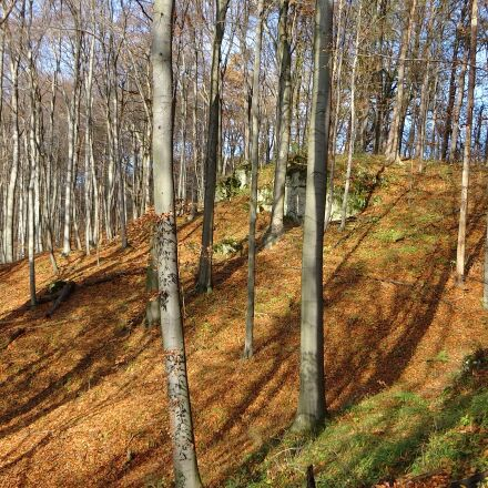 forest, autumn, autumn gold, Sony DSC-WX300