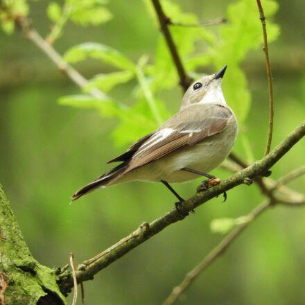 bird, forest, nature, Nikon COOLPIX B700