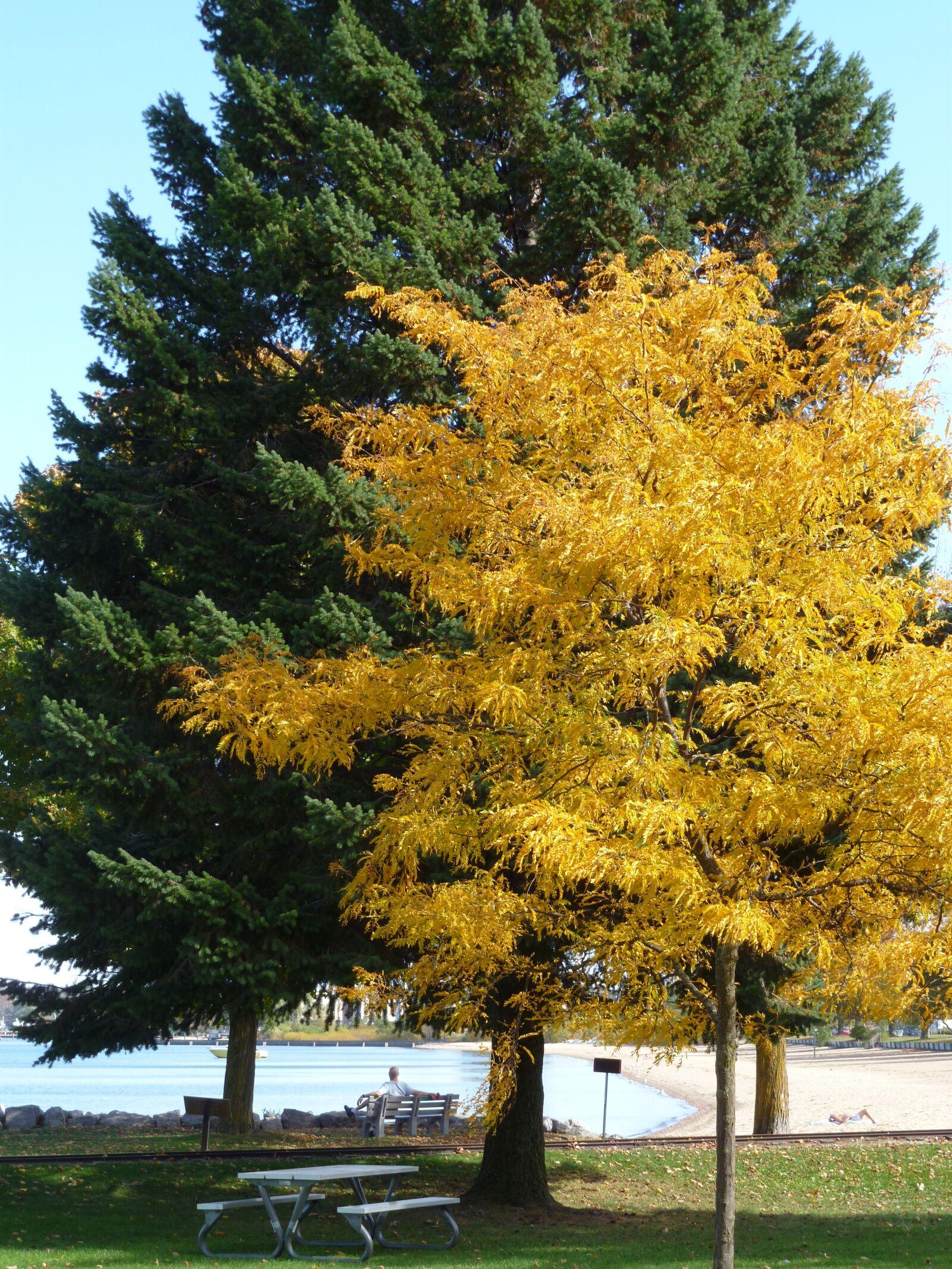 "Panasonic DMC-FH20 sample photo. ""Tree, yellow, green"" photography"