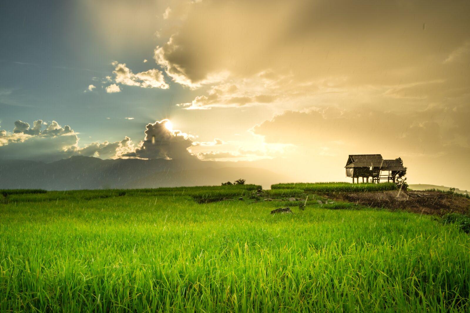 rice, sunset, rain