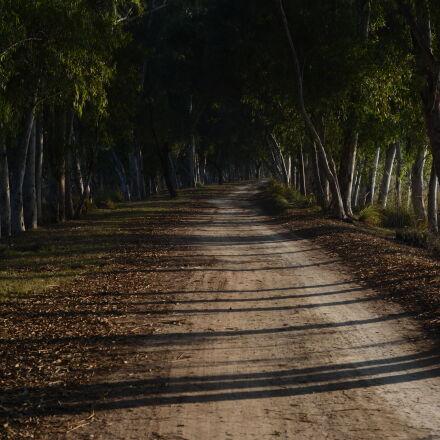 alone, field, shadows, tree, Nikon D7100