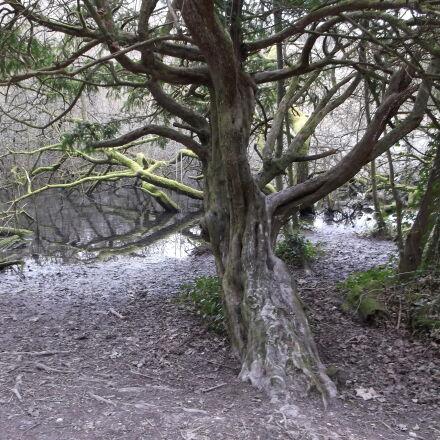 lake, tranquil, tree, wilderness, Fujifilm FinePix AX550