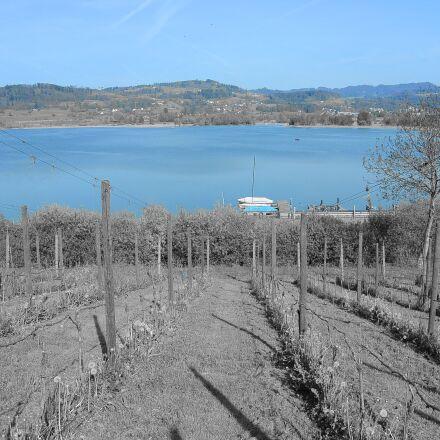 vineyard, wine, lake, Nikon 1 S1