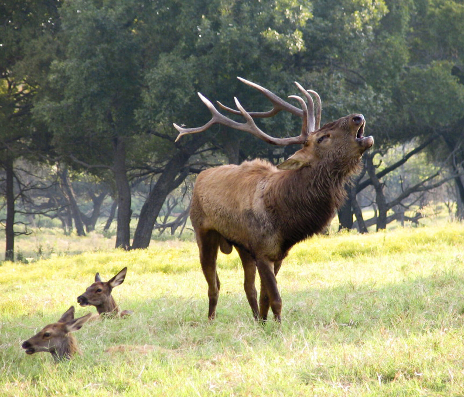 "Canon POWERSHOT S1 IS sample photo. ""Deers, roar"" photography"