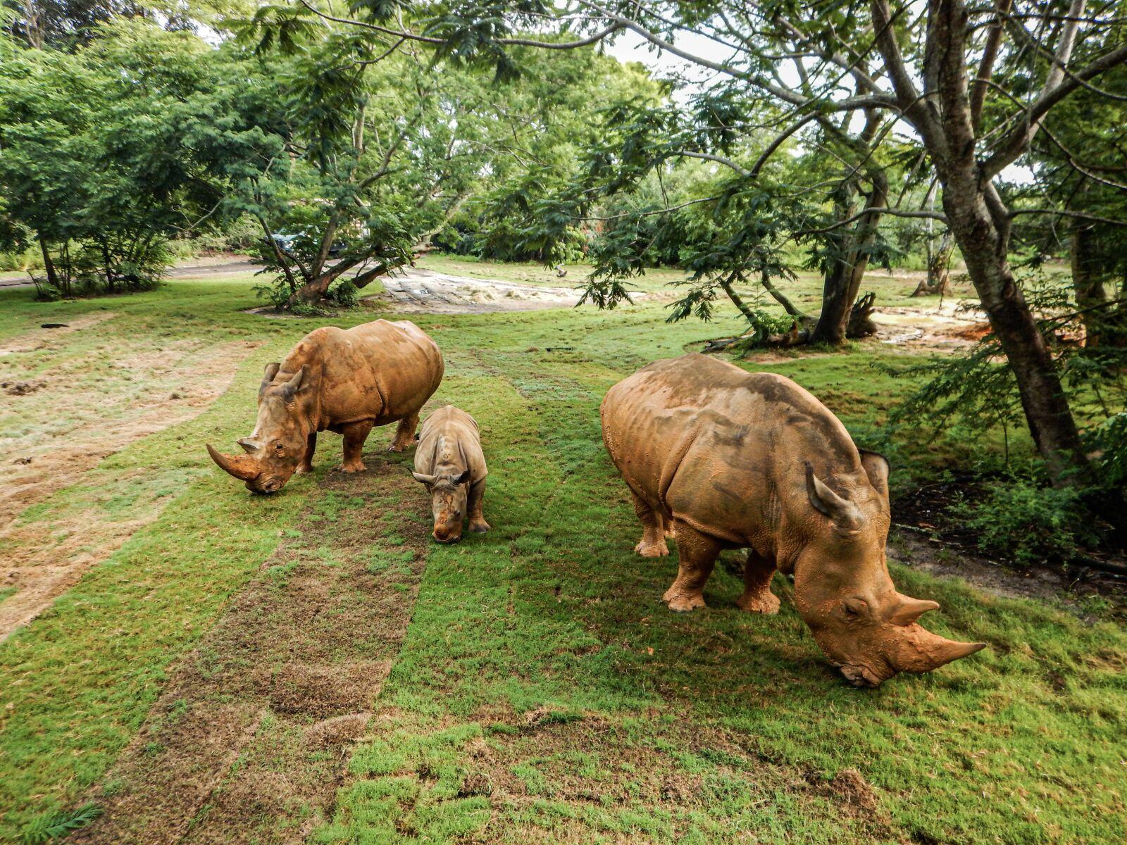 rhino, family, three
