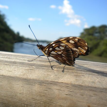argentina, butterfly, insects, Nikon COOLPIX S225
