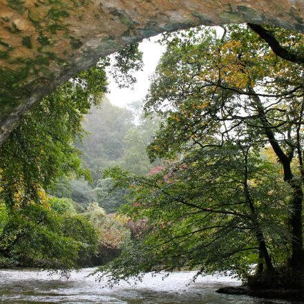 bridge, trees, river, Canon EOS 1100D