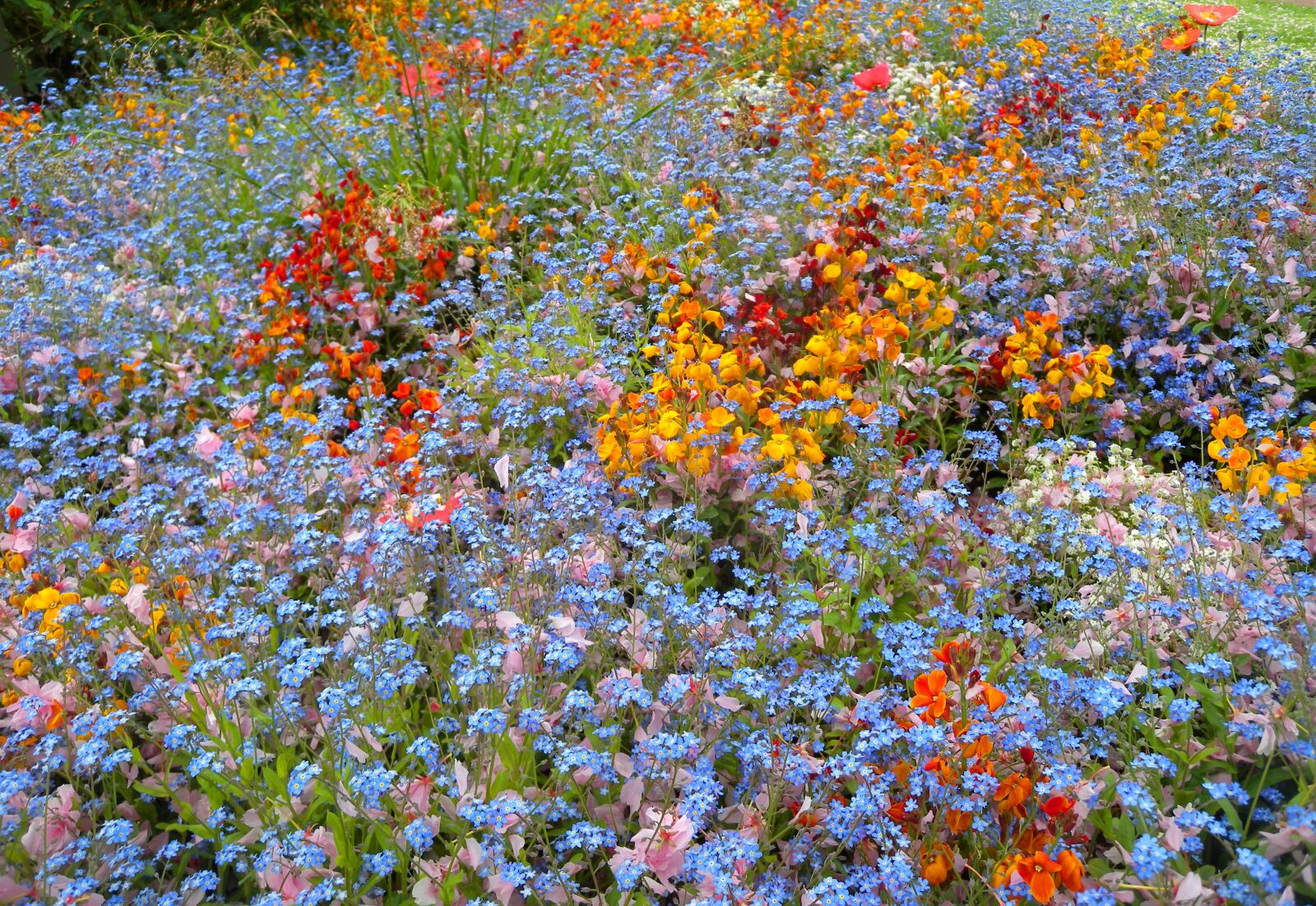 flowers, wild, colors