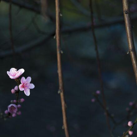 flower, red, dark background, Canon EOS 5D MARK II