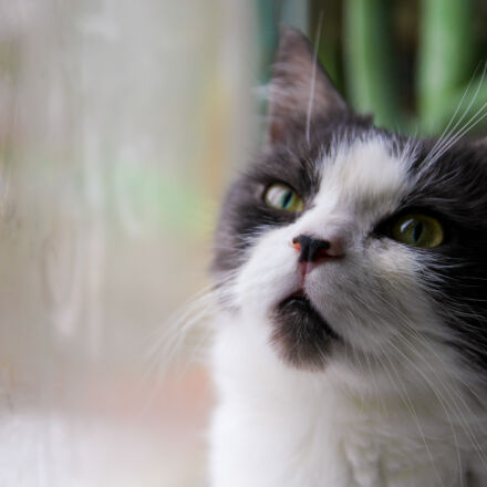 grey, and, white, fur, Canon EOS 550D